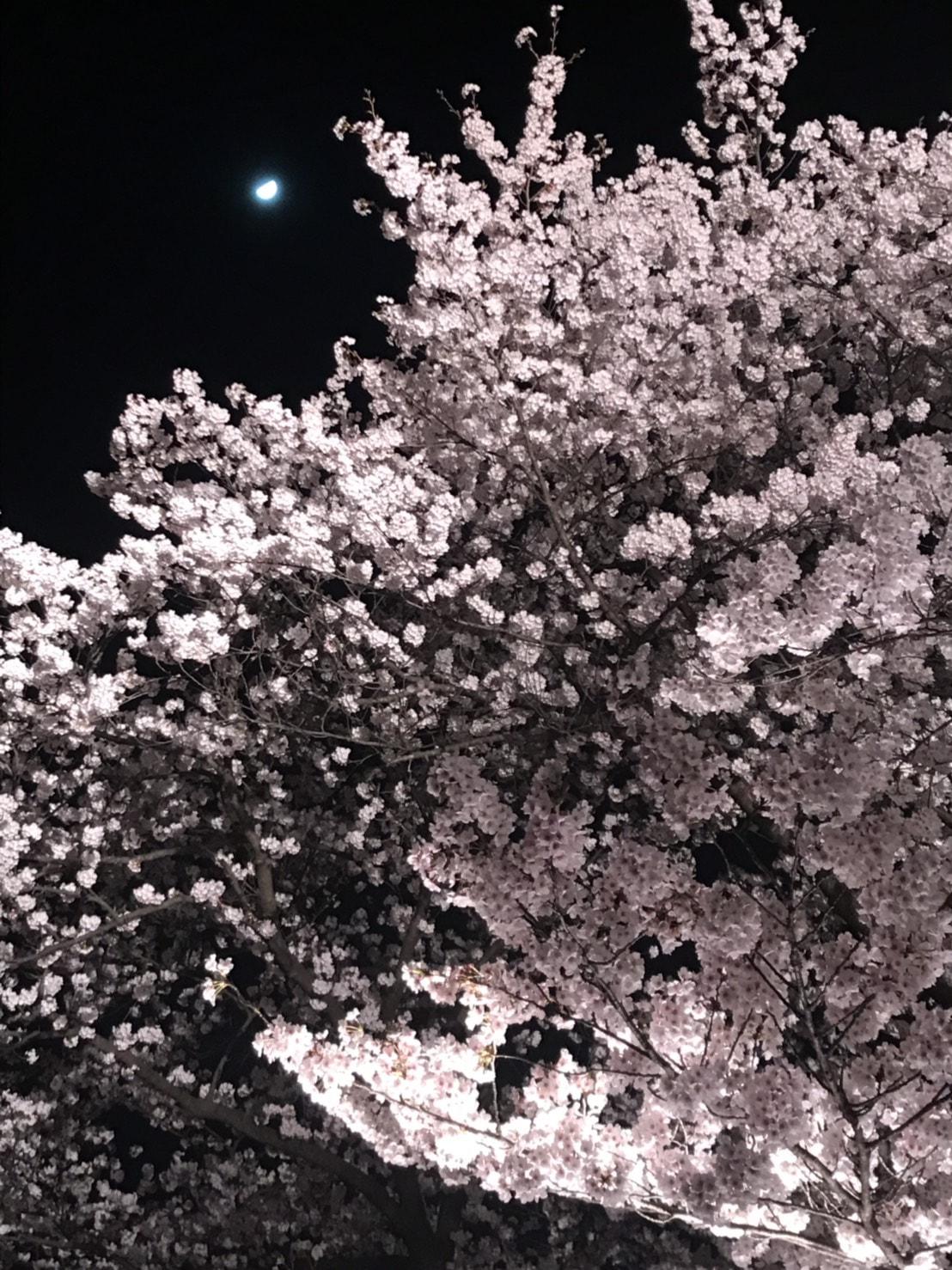 月🌙と桜🌸