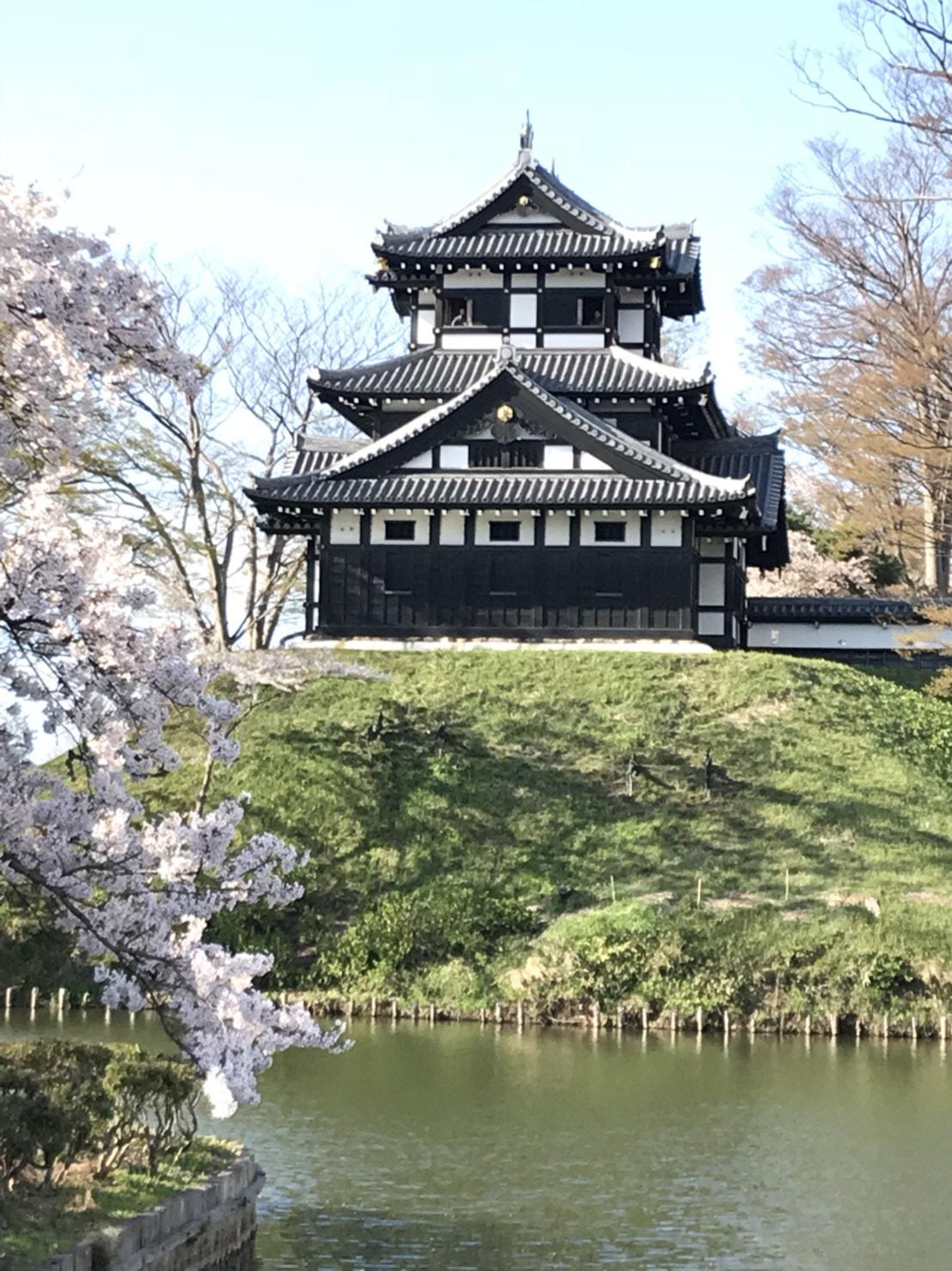 高田公園の桜🌸キレイでした😊